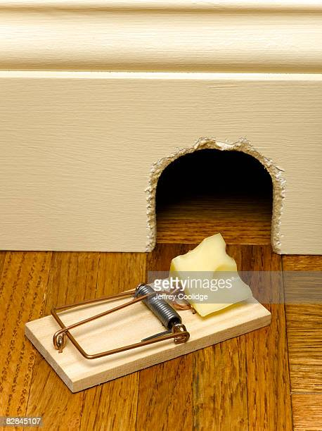 Mouse trap in front of mouse hole