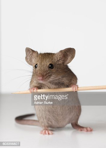 Mouse with crumbs
