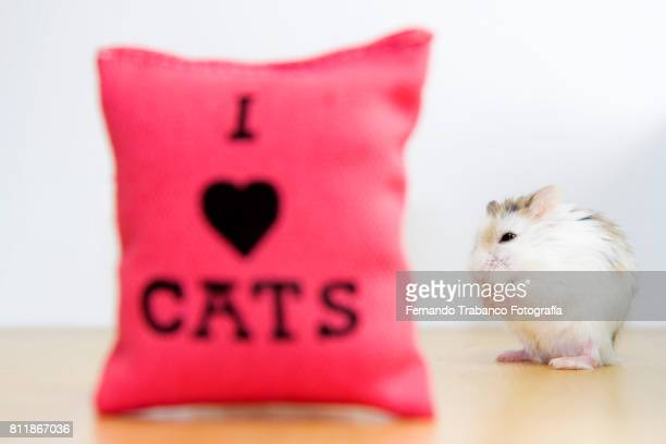 mouse with cushion I love cats