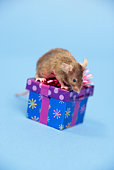 Mouse with gift