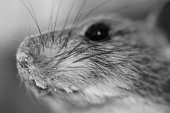 Mouse's face