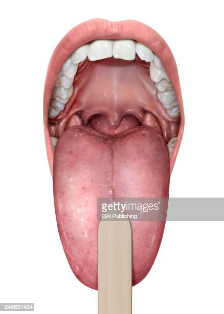 Mouth Anterior cavity of the digestive tract it has a role in ingesting food tasting breathing and speaking
