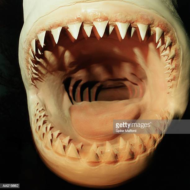 Mouth of a Great White Shark