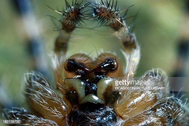 Mouth parts of a spider