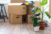 Boxes and plants in empty apartment