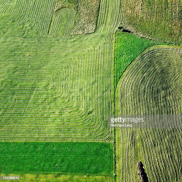 Mowed meadows