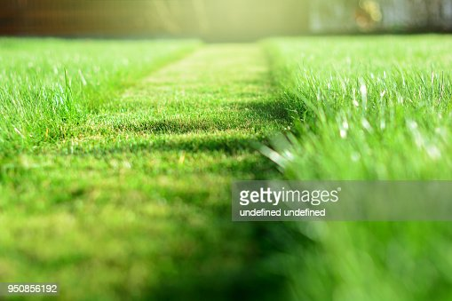 mowing the lawn. A perspective of green grass cut strip. Selective focus : Stock Photo