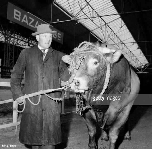 Mr Petitpierre un agriculteur d'Auffay présente le 03 Mars 1959 un de ses taureaux pendant le Salon Agricole de Paris La lauréate appartient à la...