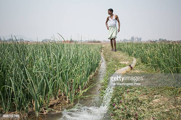 Mr Sukul Mahato 30 years stands at a plot which is supposed to be acquired by the Indian company National Thermal Power Corporation on March 27 2015...