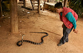 Mr Thangpast playing with a King Cobra in his house during April 2010 in Ban Khok SangaThailand Ban Khok Sanga village also known as the King Cobra...