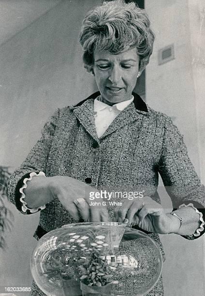 OCT 1971 NOV 7 1971 Mrs Robert Welty plans an arrangement of herbs in terrarium Patrons may choose from three sizes at Boettcher Memorial Center...
