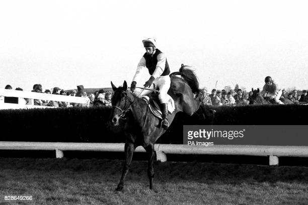 Mrs Thewlis and Mr Abbott's Wayward Lad trained by Michael Dickinson and ridden by Robert Earnshaw leads over the last jump to go on to win The King...
