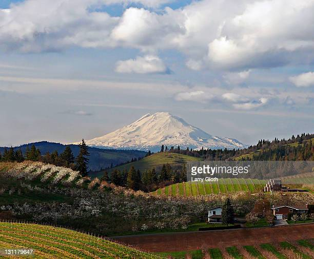 Mt. Adams and blooming orchards