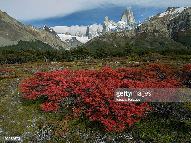 Mt Fitz Roy in colorfull Autumn vegetation