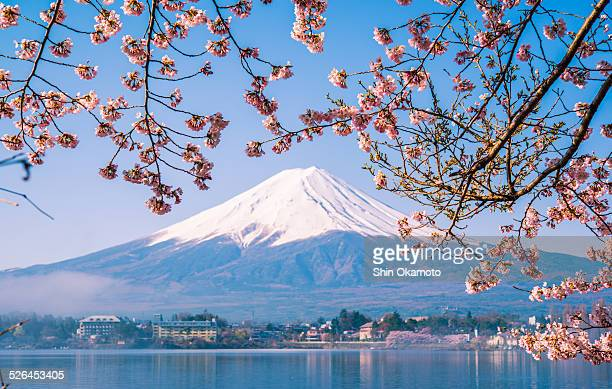 Mt. Fuji and Cherry Blossom