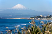 Mt. Fuji and Japanese Silver Grass