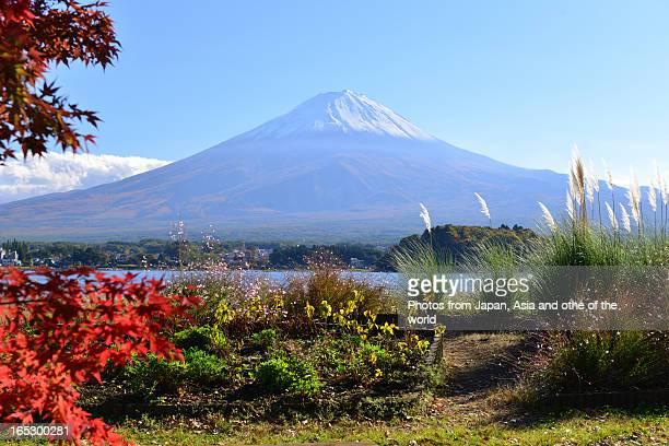 Mt Fuji in Autumn