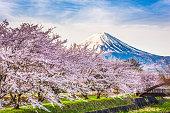 Mt. fuji Japan in Spring from the shore of Kawaguchi Lake.