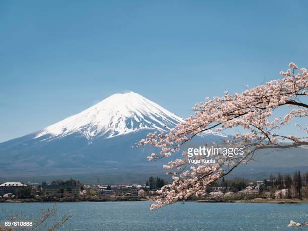 Mt. Fuji over Cherry Blossoms and Lake Kawaguchi
