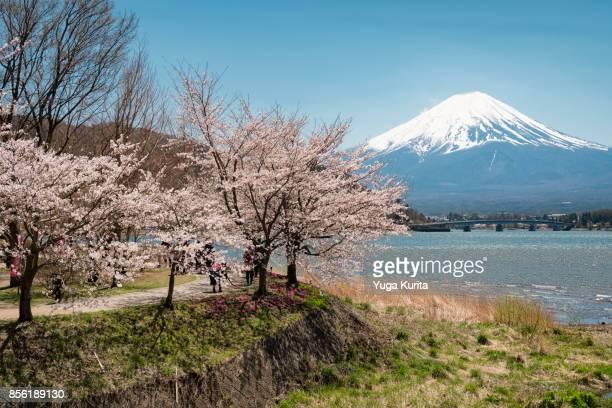 Mt. Fuji over Lake Kawaguchi in Spring