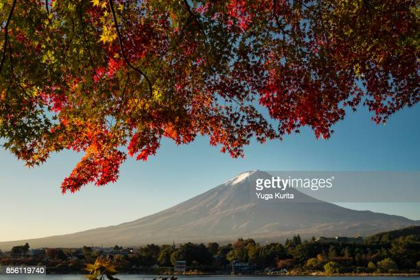 Mt. Fuji under Scarlet Maple Leaves