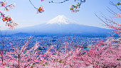 Mt. Fuji With Cherry Blossom (Sakura )in Spring, Fujiyoshida, JapanMt Fuji and Cherry Blossom  in Japan Spring Season (Japanese Call Sakura ) Selective Focus