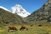 Mt Huascaran from Laguna 69 trail, Ancash province, Peru
