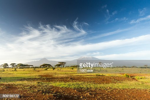 Mt Kilimanjaro & Mawenzi peak and Acacia - morning