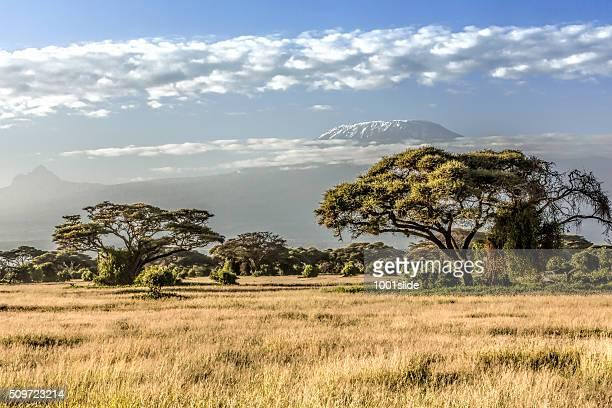 Mont Kilimandjaro, nuages et Acacia – le matin