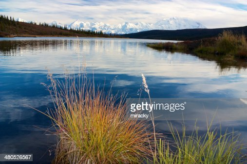 Mt. McKinley from Wonder Lake with turf of grass : Stock Photo