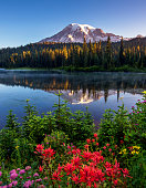 Reflection lake with Mt Rainier on the background is one of the most beautiful places in Mt Rainier National Park.