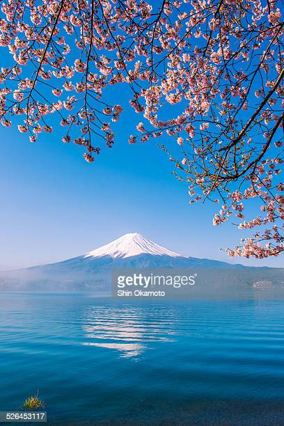 Mt.Fuji and cherry blossom