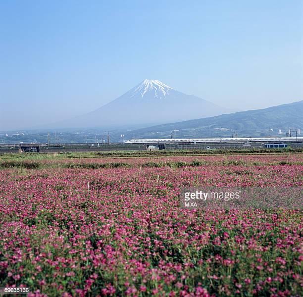 Mt.Fuji And Chinese Milk Vetch