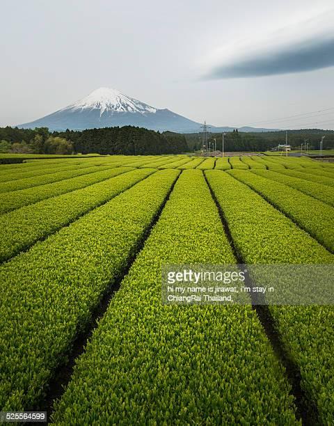 Mt.Fuji with tea plantation