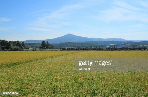 Mt.Himekami y paisaje de campo de arroz : Foto de stock