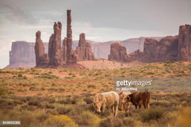 Mucche al pascolo alla Monument Valley
