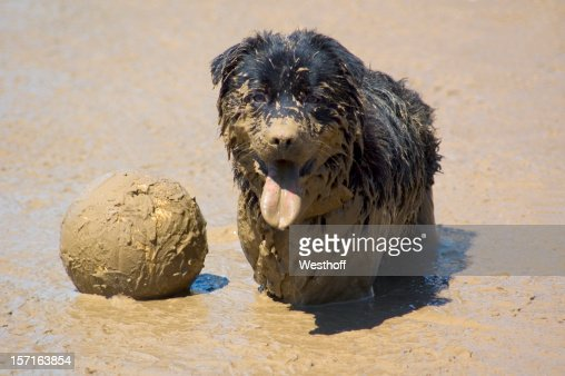 Mud Vollyball