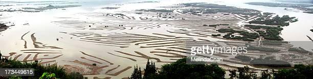 Mudflats pattern