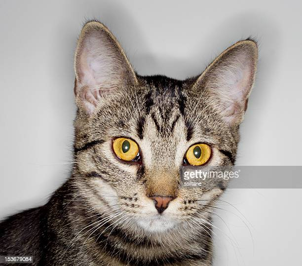 Mug shot of a cat