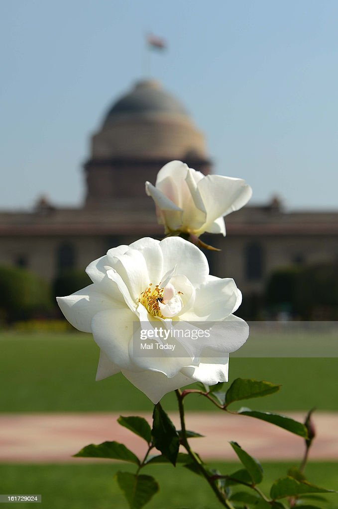 Mughal Garden view at Rashtrapati Bhawan, the Presidential Palace, in New Delhi on February 13, 2013. The 15 acre area of the Mughal Gardens of Rashtrapati Bhawan were designed by Sir Edwin Lutyens and will be open for the annual public viewing from February 15.