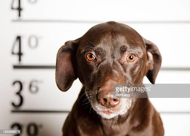 Mugshot of a Dog