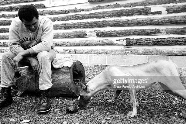 Muhammad Ali sits on a log next to a dog on the grounds of his training camp in 1976 in Deer Lake Pennsylvania
