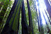 Muir Woods National Monument, a national park in California. The famous giant and tall Redwood trees will make you feel small in comparison. It is a great place to enjoy a serene hike while taking in
