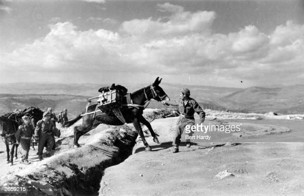 A mule train carrying ammunition near Papades on Euboia during the Greek Civil War Original Publication Picture Post 4551 The War For Greece pub 1948