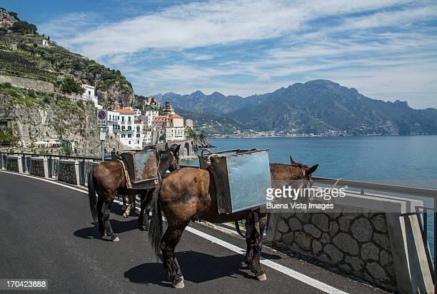 Mules in Atrani, on Amalfi Peninsula