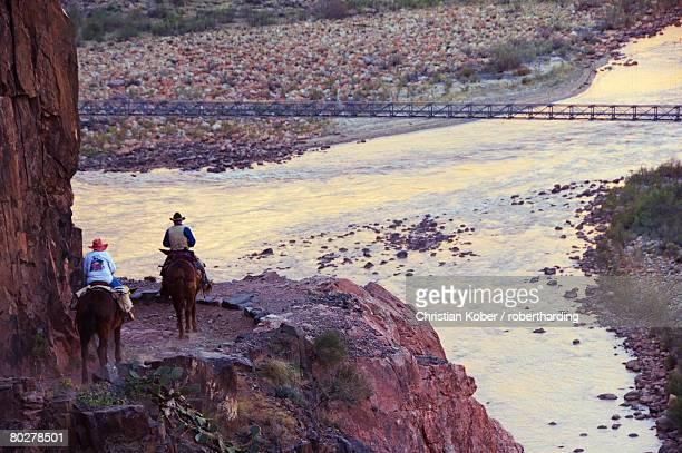 Mules taking tourists along the Colorado River Trail, Grand Canyon, Arizona, United States of America, North America