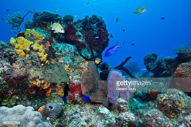 Multi color sponges in Cozumel