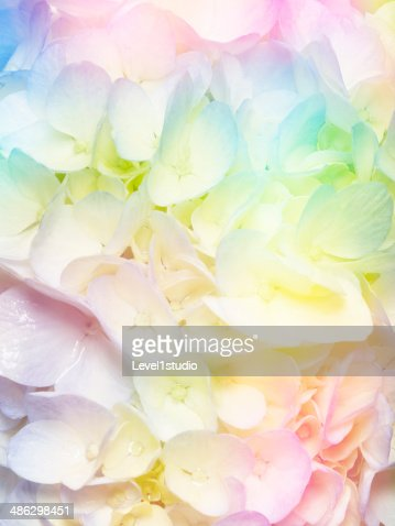 Multi colored abstract background of the flower