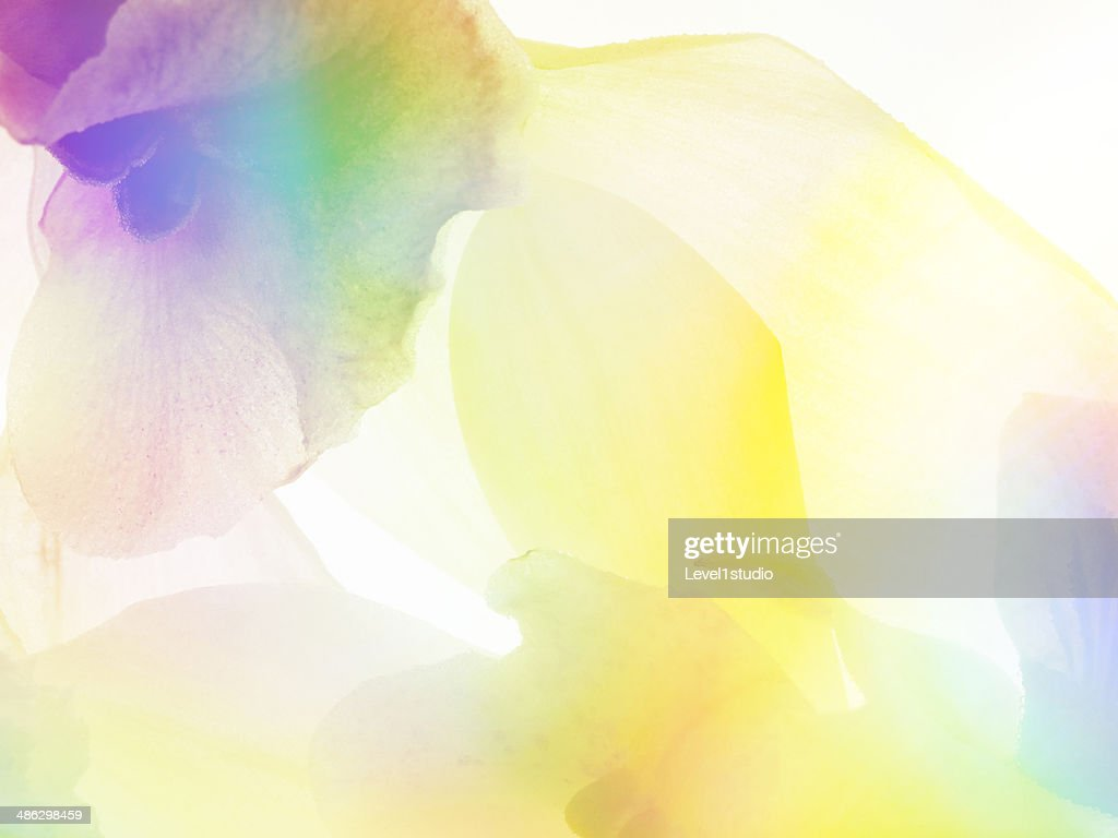 multi colored abstract background of the flower stock