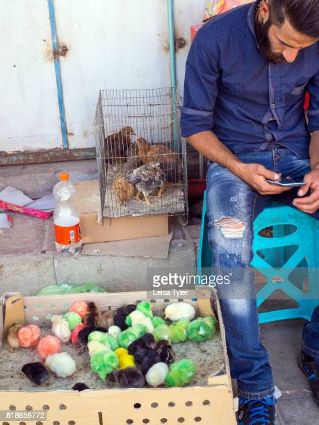 Multi colored chickens for sale in Vakil Bazaar Kerman Iran Coloring chickens to attract the attention of the buyer is a popular sales technique...